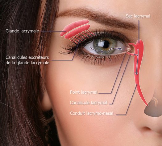 schéma canal lacrymal de l'oeil